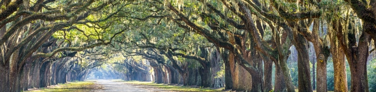 Savannah, Georgia, USA oak tree lined road at historic Wormsloe Plantation.-888023-edited.jpeg